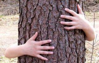 Knuffel-een-boom